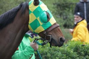 cavalli ippica