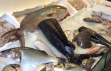 Siracusa. Carenze igieniche e pesce congelato non segnalato, sanzione al titolare di un ristorante di Ortigia
