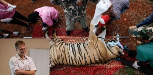 "Wildlife Authorities Raid Thailand's Controversial ""Tiger Temple"""