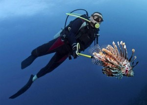 HONDURAS TO HUNT THE LIONFISH A DANGEROUS SPECIES WITH A DELICIOUS MEAT