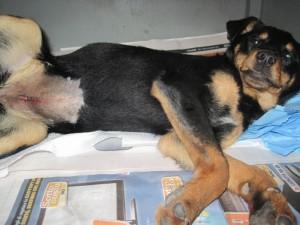 sterilizzazione-cani-gatti-06