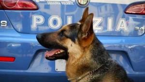 Cane antidroga polizia-2