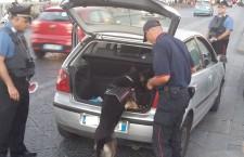 Siracusa. Contrasto allo spaccio, in campo i Carabinieri con unità cinofile: arresti