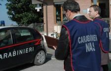 Noto. Sequestrati 42 bovini: spostati da Catania senza comunicazioni, disposti accertamenti sanitari