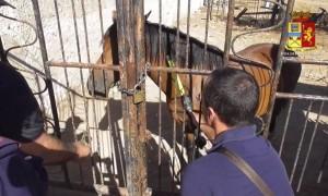 cavalli polizia controlli