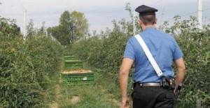 controllo-carabinieri-aziende-agricole-repertorio-