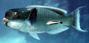 pesce-alieno