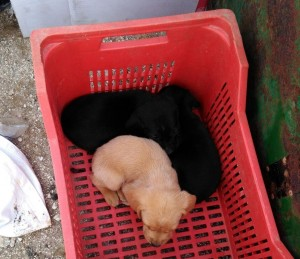 Rinvenimento cuccioli