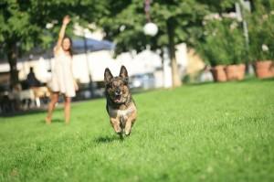 doggy park
