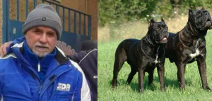 zuccaro e cani corso