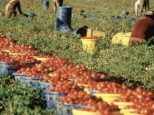 braccianti agricoli tunisini