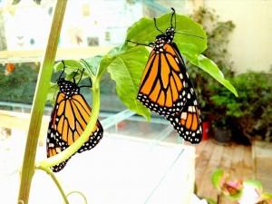 casa farfalle
