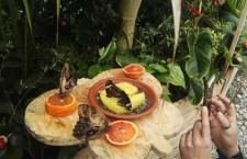 VIDEO. Siracusa: a passeggio tra le farfalle tropicali nel giardino dell'Artemision