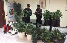 Siracusa. Piantagione di marijuana in casa, arrestato un 31enne: era già ai domiciliari, condotto in carcere